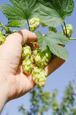 Hops-and-Hand